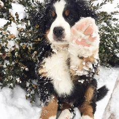 Hi paw to snow. @konatheberner ❄️