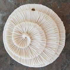 "petitcabinetdecuriosites: ""(via (5) large white spiral from c-urchin 