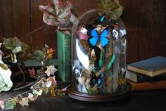 XL Glass Dome REAL BUTTERFLIES 'The Magnificent' by ExoticInsects, $449.00