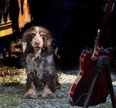 Zu Bilder Armer HundHundWitzige Die 14 Besten lcFK1J