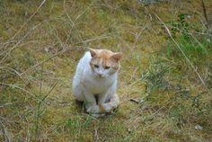 El gata pensador
