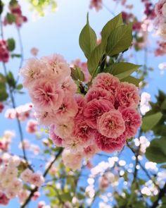 ❤️ Rose, Flowers, Plants, Instagram, Pink, Plant, Roses, Royal Icing Flowers, Flower