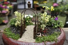 Mini gardens are everywhere these days.