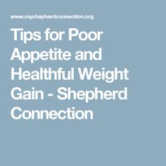 Tips for Poor Appetite and Healthful Weight Gain - Shepherd Connection