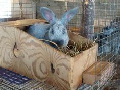 Nest Box Info - Brick House Acres Rabbitry Rabbit Nesting Box, Nesting Boxes, Rabbit Farm, Meat Rabbits, Rabbit Colors, Bunny Cages, Nest Box, Livestock, Pet Care