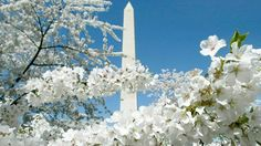 20 best-kept secrets of Washington, DC