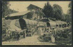http://www.postcardman.net/ceylon/201891.jpg  Carting tea from factory to the harbour (J. Quillé & Sons Tea Importers).