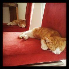 co-sleeping Sleep, Cats, Animals, Gatos, Animales, Animaux, Animal, Cat, Animais