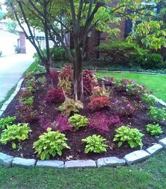 Colorful Shade Garden in Fall