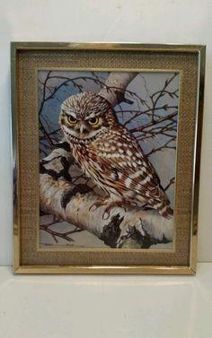 "SOLD  Basil Ede ""Little Owl-Silver Birch"" Framed Print  Signed"