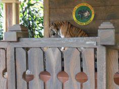 Taman Safari Indonesia at Cisarua - Bogor, Indonesia