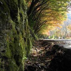 【servicar750】さんのInstagramをピンしています。 《#japan #大分県 #写真好きな人と繋がりたい #写真 #写真撮ってる人と繋がりたい #写真を撮るのが好きな人と繋がりたい #森 #紅葉 #苔 #東京カメラ部 #耶馬渓 #ライカ #ライカ#leica #leicax1 #leicacamera》