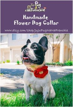 Items similar to Female Floral dog collar Flower, Large Girl dog collar accessories, New dog gift, Black Red Rose dog collar, Small Puppy Cotton dog collar on Etsy Dog Harness, Dog Leash, Bulldog Puppies, Dogs And Puppies, Pink Dog, Red Dog, Golden Puppy, Puppy Dog Eyes, Types Of Dogs