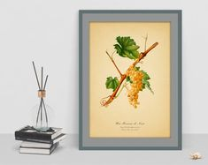 Watercolor picture of gold Grape decor vintage botanical antique picture wall poster home decor rare image cubicle decor instant download Antique Pictures, Watercolor Pictures, Rare Images, Botanical Wall Art, Cubicle, Poster Wall, Picture Wall, Antiques, Unique Jewelry
