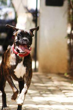 Chloe Running by Rahul Matthan, via Flickr
