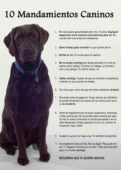 [Imagenes] Lenguaje y mandamientos de los perros