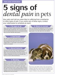 #Veterinary client handout: 5 signs of dental pain in pets - dvm360