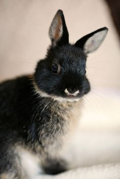 """Sooty Bunny :)"" by Mark Philpott on Flickr - Sooty Bunny is a handsome chap!"
