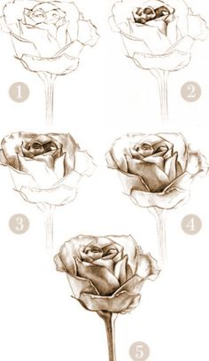 So Easy To Draw The Most Prefect Beautiful Rose #Various #Trusper #Tip