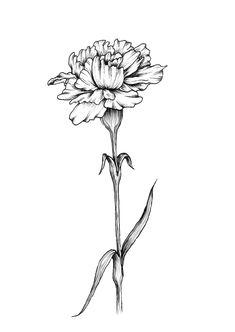 Single Carnation Art Print by dashblossoms Carnation Flower Tattoo, Delicate Flower Tattoo, Realistic Flower Tattoo, Birth Flower Tattoos, Flower Tattoo Foot, Small Flower Tattoos, Flower Tattoo Shoulder, Flower Tattoo Designs, Carnation Drawing