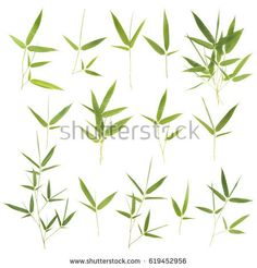 Collection of bamboo leaves isolated on white background Sumi E Painting, Chinese Painting, Chinese Art, Chinese Bamboo, Chinese Brush, Chinese Calligraphy, Calligraphy Art, Bamboo Leaves, Watercolor Paintings