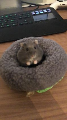 This sub is dedicated to hamsters and their humans. Hamster Pics, Baby Hamster, Hamster Care, Cute Small Animals, Cute Funny Animals, Cute Baby Animals, Fluffy Animals, Chinchilla Cute, Diy Guinea Pig Cage
