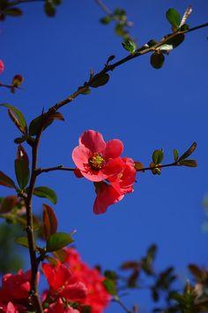Flower, Red - Free Image on Pixabay