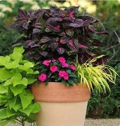 This site is AWESOME. photo gallery of containers with instructions to plant and description of flowers-- for full sun, partial, shade etc. Love the ideas on which plants/flowers to mix & size of containers to put them in. Outdoor Plants, Garden Plants, Outdoor Gardens, Shaded Garden, Garden Spaces, Outdoor Flower Pots, Container Plants, Container Gardening, Full Sun Flowers