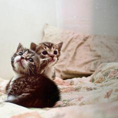 adorable kitties http://sulia.com/my_thoughts/6772a3b9-b97d-4022-ab5d-d5111eeb85b7/?pinner=119686333