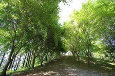 月明洞の緑の道