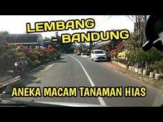 Explore Jalan Ke Tempat Aneka Tanaman Hias Di Lembang Bandung - YouTube Lembang, Channel, Explore, Youtube, Exploring, Youtubers