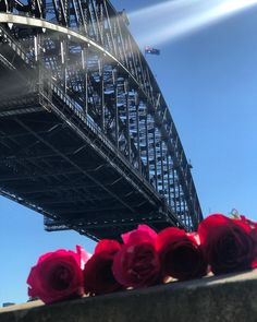 Enjoying #WorldTourismDay with a perfect view of the Sydney harbour bridge!