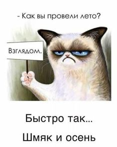 Birthday Greeting Message, Hello Memes, Russian Humor, Wit And Wisdom, Funny Phrases, Quotes And Notes, Husband Love, Cool Pets, Dragons