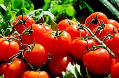 Growing tomato plants from seeds is not that difficult and it is extremely rewarding. Phenomenal Growing Tomatoes from Seeds Ideas. Vegetable Planting Guide, Planting Vegetables, Companion Planting, Organic Vegetables, Vegetable Garden, Growing Tomatoes From Seed, Growing Tomato Plants, Grow Tomatoes, Baby Tomatoes