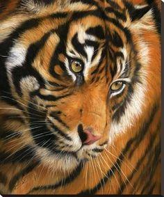 Animal Paintings: David Stribbling - Art - Portrait of a Tiger by David… Jaguar, Grand Chat, Big Cats Art, Cat Art, Gato Grande, Tiger Face, Painting Edges, Wildlife Art, Wildlife Paintings