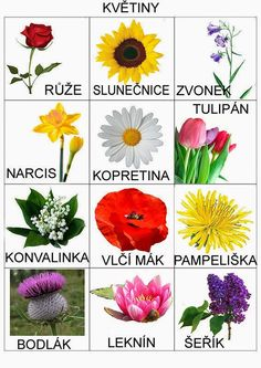 Pro Štípu: Komunikační obrázky Montessori Trays, Montessori Materials, Spring Activities, Activities For Kids, Games For Kids, Diy For Kids, Teaching Posts, Nature Scavenger Hunts, Kids Planner