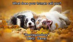 Deliciosas fotografias de cães de Alicja Zmyslowska / Great dog photos by Alicja Zmyslowska Funny Animal Pictures, Dog Pictures, Funny Animals, Cute Animals, Animals Dog, Adorable Pictures, Animals Images, Most Beautiful Dogs, Animals Beautiful