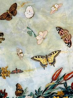 1765 Giuseppe Zocchi Butterflies | Flickr - Photo Sharing!