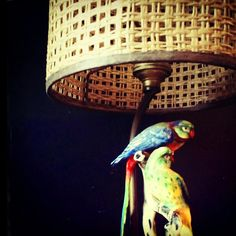 Polly wants this lamp.