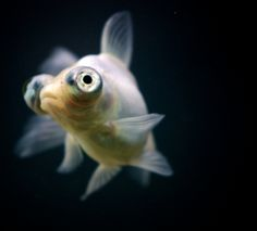 Beautiful Fish Photography on Flickr | WeekendContent.com