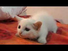 Compilation 2014 des chats les plus drôles en Vidéo http://www.15heures.com/videos/compilation-2014-chats-les-droles-en-video-2278.html #LOL
