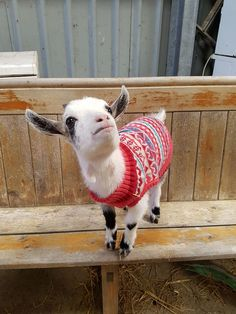 Ty looking cute in his new gansey (jumper). Thanks to Denise Murphy for the photo!