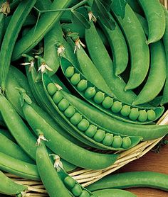 How to Grow Peas - Gardening Tips and Advice, Vegetable Seeds and Plants at Burpee.com