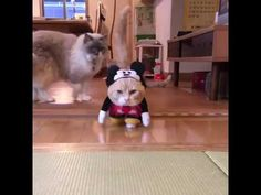 Cat dressed as mickey mouse - YouTube
