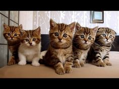 Funny Cats. The Best. Happy Birthday R5 !!! - YouTube