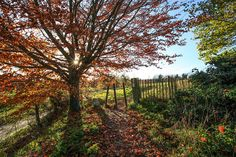 Autumn Colours.... by TRM-photography.co.uk, via Flickr