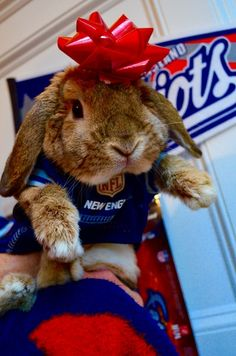 Say hello to Dot, our fluffiest Patriots fan! #Bunny #Patriots #PETriots