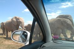 Elephants through windshield of car, in Addo National Park, South Africa road trip - Top Tips for a South Africa Road Trip