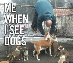 This is so true. I will see a dog at work, and will go to owner to ask it I can pet their dog! LoL