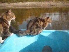 ジャンプが届かない猫 created by trend news